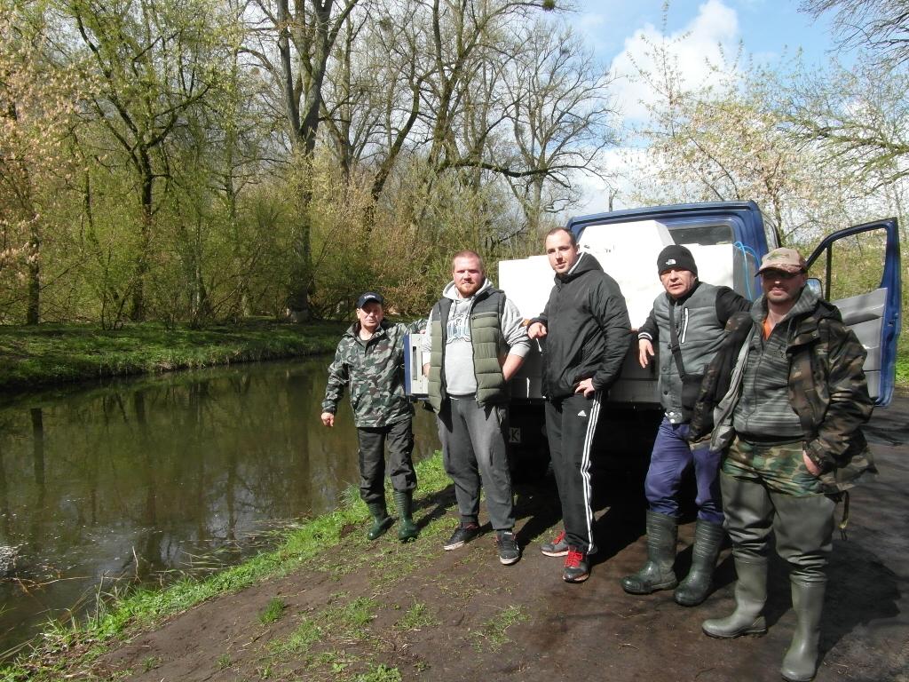 Wiosenne zarybianie rzeki Iny 13-14 kwietnia 2017 r.